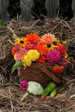 A queda floresce na cesta tecida com feno e a cerca velha no fundo foto de stock