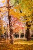 Queda Floresta outonal fotos de stock