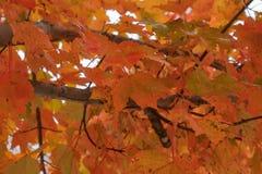 Queda Foilage em outubro fotografia de stock