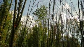 Queda Forest Series - Timelapse das nuvens que rolam sobre a floresta bonita do outono filme