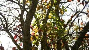 Queda Forest Series - uma árvore que gira parcialmente alaranjada durante a queda adiantada filme