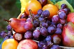 A queda frutifica alimento da colheita das peras de uvas do outono, outono Imagem de Stock Royalty Free