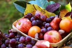 A queda frutifica alimento da colheita das uvas das maçãs do outono, saúde Imagens de Stock Royalty Free