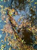 A queda molhada sae na estrada asfaltada em uma poça Imagem de Stock