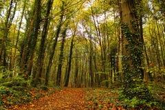 Queda na floresta Fotografia de Stock Royalty Free