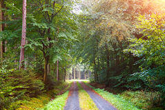 Queda na floresta Fotos de Stock Royalty Free