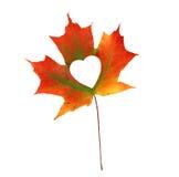 Queda na metáfora da foto do amor Folha de bordo vermelha com o coração dado forma fotos de stock
