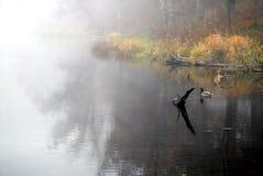 Queda no lago Imagem de Stock