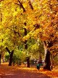 Queda no parque imagens de stock royalty free