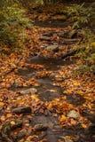 Queda no parque nacional de Great Smoky Mountains Imagens de Stock Royalty Free