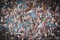 Queda seca da folha Fotos de Stock