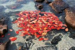 Queda tropical das folhas imagens de stock