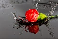Queda vermelha da flor na água Fotos de Stock