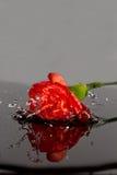 Queda vermelha da flor na água Imagens de Stock