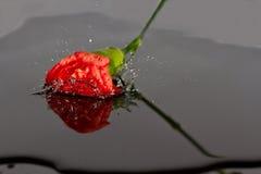 Queda vermelha da flor na água Fotografia de Stock Royalty Free