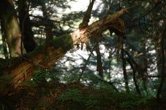 Quedas caídas de Snoqualmie do início de uma sessão Fotos de Stock