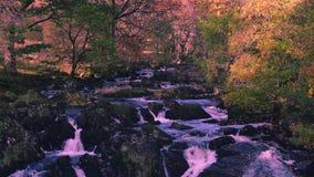 Quedas da andorinha no parque nacional de Snowdonia, Reino Unido filme