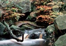 Quedas da floresta Imagens de Stock Royalty Free