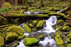 Quedas da floresta imagens de stock