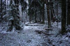 Quedas da neve na floresta com árvores A neve intensa cobre imediatamente a superfície dos ramos da floresta e de árvore com uma  foto de stock royalty free