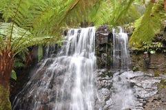 Quedas da prata, Tasmânia Imagem de Stock Royalty Free