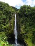 Quedas de Akaka, console grande, Havaí Fotografia de Stock