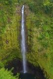 Quedas de Akaka, ilha grande, Havaí Foto de Stock Royalty Free