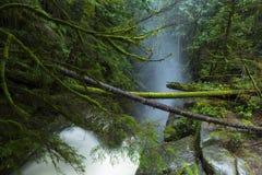Quedas de Cypress Fotografia de Stock