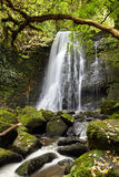 Quedas de Matai, Nova Zelândia fotos de stock royalty free