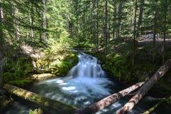 Quedas de Whitehorse, Oregon Imagens de Stock