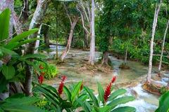 Quedas do rio de Dunn, Ocho Rios, Jamaica Fotos de Stock