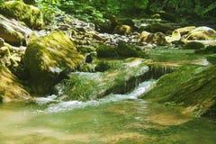 Quedas pequenas em um arvoredo, a selva verde Imagem de Stock