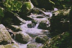 Quedas pequenas em um arvoredo, a selva verde Fotos de Stock