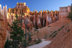 Queen& x27; след сада s, каньон Bryce стоковые фото