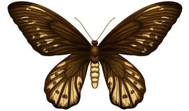 Queen Alexandra's birdwing Royalty Free Stock Photo