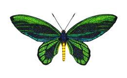 Queen Alexandras Birdwing Stock Images