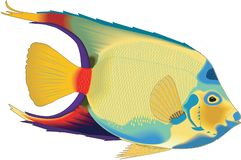 Free Queen Angelfish Swimming Illustration Royalty Free Stock Images - 133912679