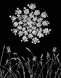 Queen Anne's Lace stock photos