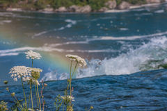 Queen Anne's Lace and Rainbow Royalty Free Stock Photography