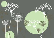 Queen Annes Lace Royalty Free Stock Photography