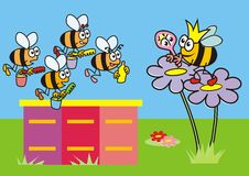 Queen Bee and the workers Royalty Free Stock Image