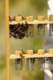Queen breeding Stock Photos