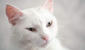 Queen cats. Regal view of Princess Cat Royalty Free Stock Photo