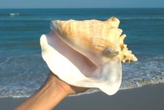 Queen Conch in hand Royalty Free Stock Photography