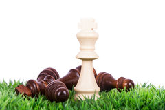 Queen Defeats on Grass. Victory, queen defeats dark pawns on grass, isolated on white background Stock Photos