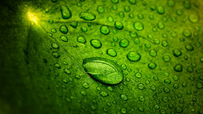 Queen of Droplets Stock Photo