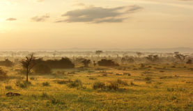 Queen Elizabeth National Park at evening time. Sunny evening scenery in the Queen Elizabeth National Park in Uganda (Africa Royalty Free Stock Image