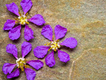 Queen flowers on sand stone floor Royalty Free Stock Image
