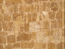 Queen Hatshepsut and sacred cow relief stock photography