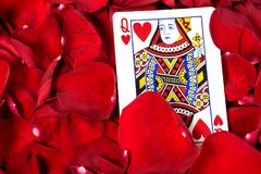 Queen of hearts in red petals Royalty Free Stock Photos